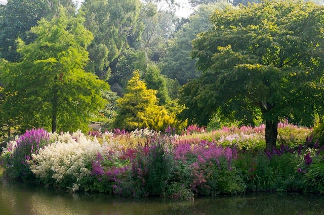 a picture of a garden with trees and purple flowers